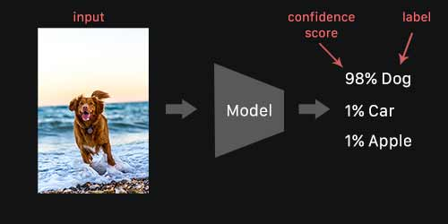 How image recognition works.