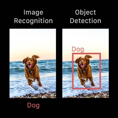 Object Detection vs. Image Recognition
